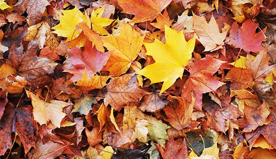 Que faire des feuilles de l'automne ?